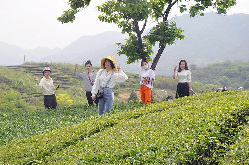 想学茶艺师从哪学起,从茶学起才是正道
